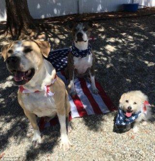 Kaley Cuoco: i cani dell'attrice celebrano il 4 luglio tra le polemiche