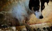 Heart Of A Dog di Laurie Anderson al cinema il 13 e 14 settembre