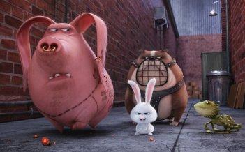 Pets - Vita da animali: un momento del film animato
