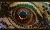 Voyage Of Time: arriva il trailer del film di Terrence Malick