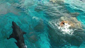 Paradise Beach - Dentro l'incubo: lo squalo minaccia Blake Lively in una scena del film