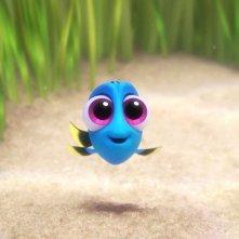 Alla ricerca di Dory: Baby Dory in una scena del film animato