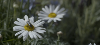 images/2016/10/27/blackmirror-bee.png