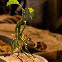 Animali Fantastici e Dove Trovarli: una creatura magica