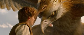 Animali Fantastici e Dove Trovarli: Eddie Redmayne in una foto del film