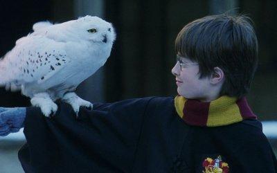 Harry Potter: 10 cose che (forse) non sapete sulla saga