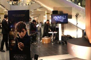 Animali fantastici e dove trovarli: l'evento a Porta di Roma