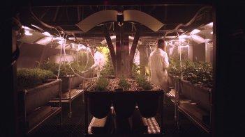 Mars: un'immagine dedicata all'agricoltura su Marte