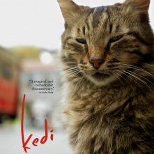 Locandina di Kedi