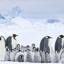 La marcia dei pinguini - Il richiamo: un'immagine tratta dal documentario
