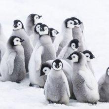 La marcia dei pinguini - Il richiamo: un'immagine tratta dal documentario di Jacquet