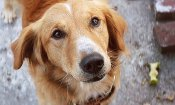 """Qua la zampa!: bufera per abusi su un cane, il produttore """"sconvolto"""" dal video sul set"""