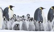La marcia dei pinguini - Il richiamo: il trailer ufficiale del film di Luc Jacquet