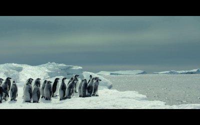 La marcia dei pinguini il richiamo - Trailer italiano