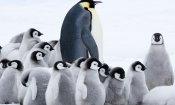 La marcia dei pinguini - Il richiamo: immagini spettacolari dal polo