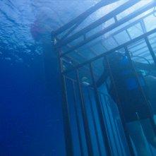 47 metri: un'immagine del film
