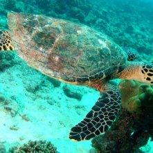 Aldabra - C'era una volta un'isola: un'immagine subacquea del documentario