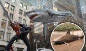 Sharknado diventa realtà: in Australia piove uno squalo dal cielo dopo il ciclone (VIDEO)