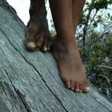 Alamar: un'immagine tratta dal documentario