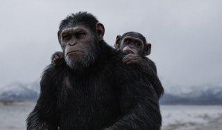 The War - Il pianeta delle scimmie: una scena del film di Matt Reeves