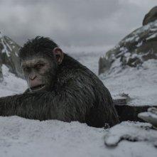 The War - Il pianeta delle scimmie: un'immagine del film diretto da Matt Reeves