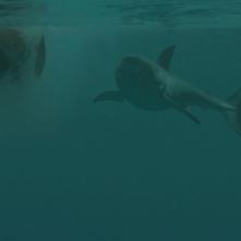 Open Water 3: un'immagine del film