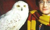 Harry Potter: Le civette dell'Indonesia stanno sparendo per colpa della saga