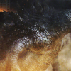 Godzilla: King of the Monsters, Michael Dougherty svela una nuova foto del mostro