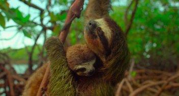 Earth: Un giorno straordinario, una scena del documentario