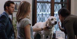 Una scena di Mozart, un cane per due