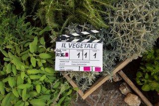 Il vegetale: un'immagine dal set del film