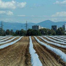 The Harvest: un'immagine tratta dal documentario di Andrea Paco Mariani