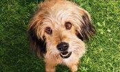 Benji: il trailer del film che riporta sugli schermi il simpatico cagnolino