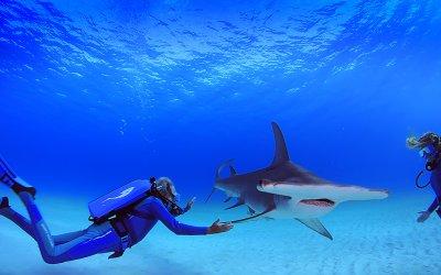 Le meraviglie del mare, la lettera d'amore all'oceano di Jean-Michel Cousteau