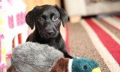 Sky Uno Loves Animals: torna il canale dedicato ai migliori amici dell'uomo!