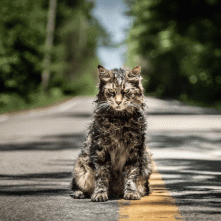 Pet Sematary: una foto del gatto Church