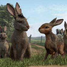 La collina dei conigli: una foto della nuova serie tv