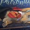 Harry Potter: ecco il cane che risponde solo agli incantesimi di Hogwarts!