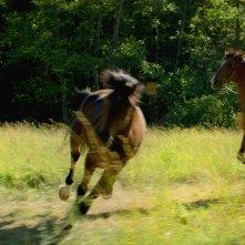 Out Stealing Horses: una sena del film