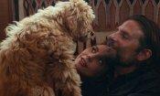 Oscat 2019: Bradley Cooper è il Miglior Regista per aver diretto il suo cane in A Star Is Born