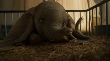 Dumbo 11