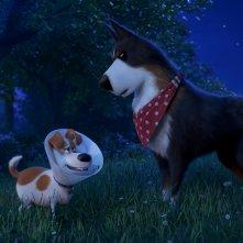 Pets 2 - Vita da Animali: Max e Rooster in una scena