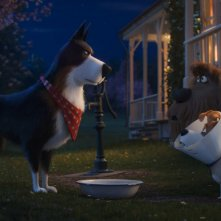 Pets 2 - Vita da Animali: un momento del film