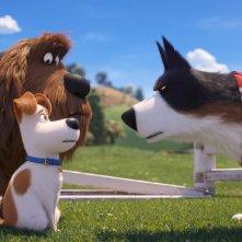 Pets 2 - Vita da Animali: Max insieme a Rooster in una scena