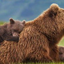 Bears: una scena del documentario